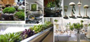 растения в интерьере1