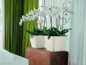 растения в интерьере3