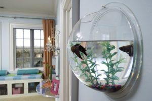 akvaarium4